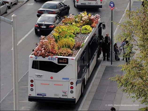 Bus Root
