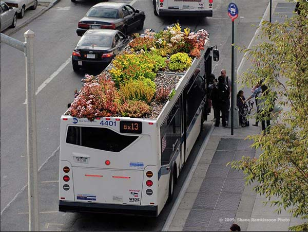 Root Bus par Marco Castro Cosio