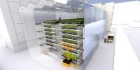 Une ferme urbaine pour renouveler la salade lyonnaise