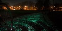 Une piste cyclable phosphorescente aux Pays-Bas
