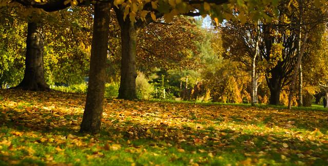 Hyde Park - London - Flickr - Hobbitbrain